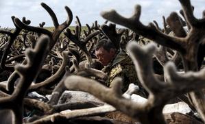 Союз оленеводов Ямала предложил создать фонд развития сельского хозяйства