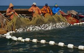 Камчатским общинам предложили поделиться рыбой с оставшимися без квот соплеменниками