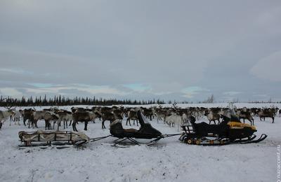Пробелы и строчки реестра коренных народов России