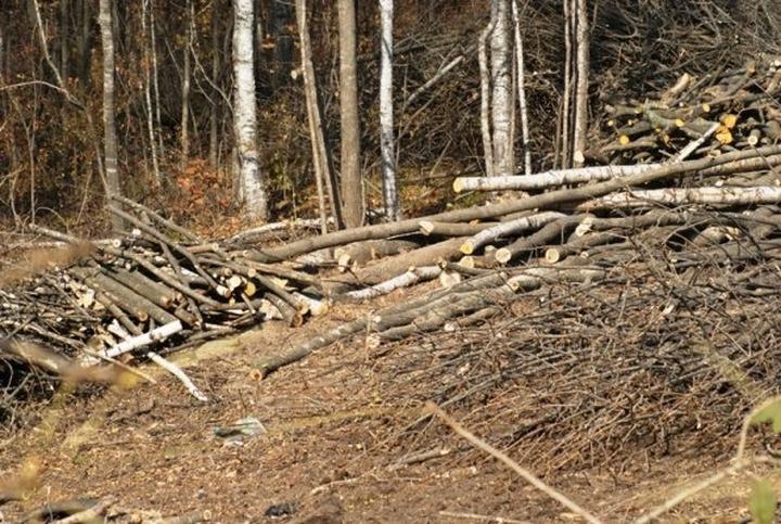 Над качугскими эвенками нависла экологическая угроза