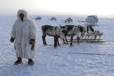 Таймырские депутаты выступили против работы WWF на полуострове из-за опасений за коренные народы