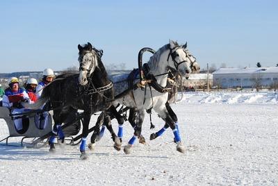 В Вологодской области из-за Праздника коня возникла многокилометровая пробка