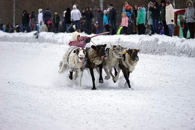 Оленьи бега состоялись в честь юбилея Воркуты