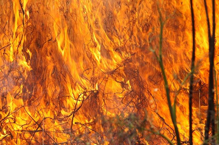 Более четырех тысяч гектаров тундры горят в Магаданской области