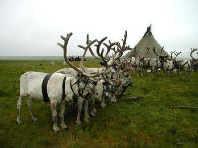 На Ямале пройдет мониторинг мест проживания малочисленных народов