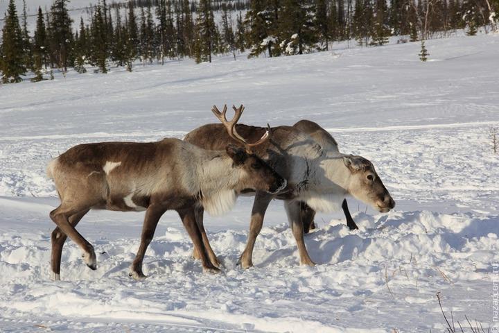 Школьники из числа коренных народов узнают о проблемах экологии на ненецком языке