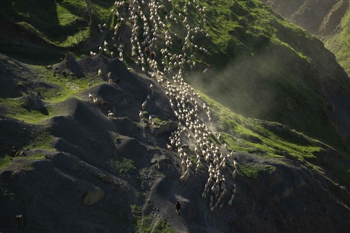 Фото с историей о традиции животноводов Дагестана победило в конкурсе National Geographic