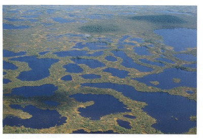 Минприроды РФ разрешило добывать нефть в Нумто