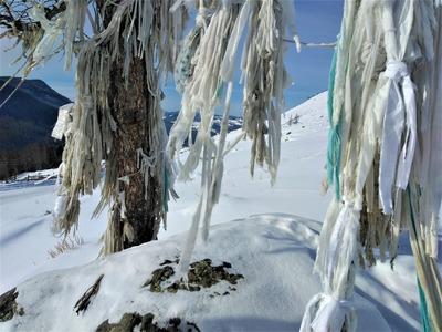 Алтайцы недовольны туристами, которые вешают на священные деревья медицинские маски