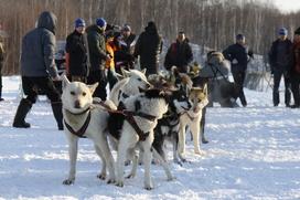 """Рекордная гонка на собачьих упряжках """"Берингия"""" стартовала на Камчатке"""