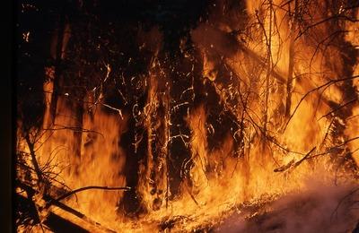В Якутии пожар подошел к стойбищу оленеводов