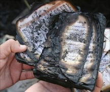 Полицейские задержали подозреваемого в сожжении Корана