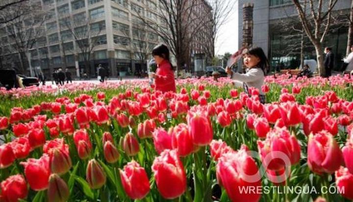 Таджики Красноярска отметили День тюльпанов