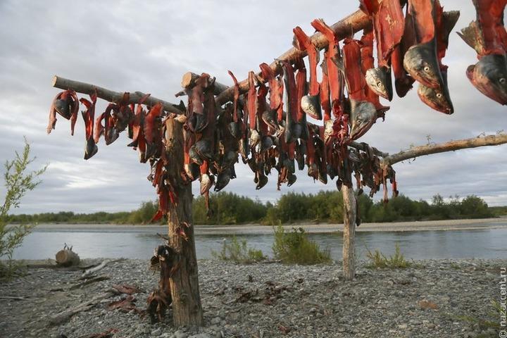 На Чукотке более 3 тысяч представителей коренных народов отчитались о рыболовстве