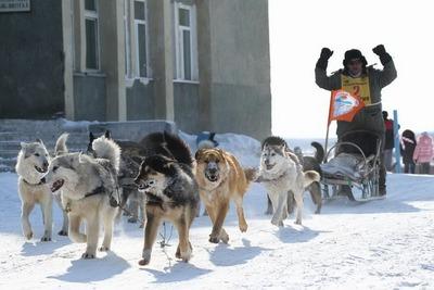 """Камчатская гонка на собачьих упряжках """"Берингия-2016"""" стартует 1 марта"""
