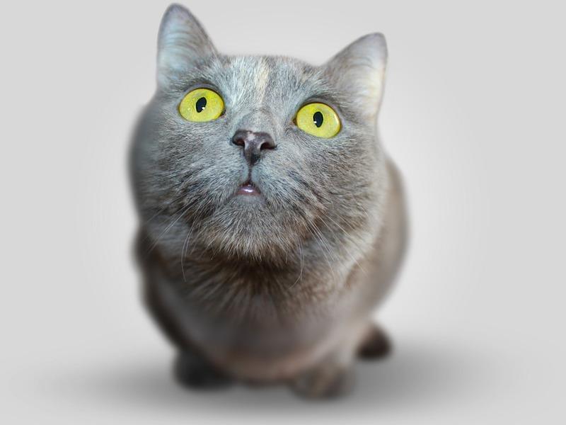 Как правильно позвать кошку? Отвечают народы России