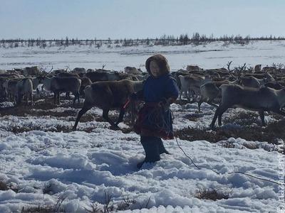 Дети из арктических регионов России озвучат мультфильмы на родных языках
