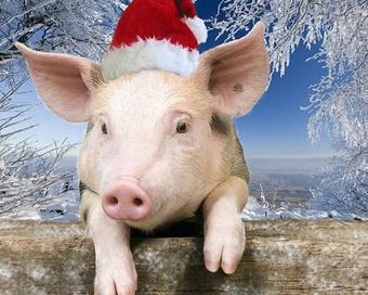 Как говорит свинья: грунц-грунц или чахай-чахай?