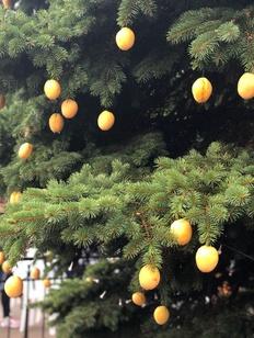 "Абрикосовую елку увидели гости армянского ""Абрикоса"" в Москве"