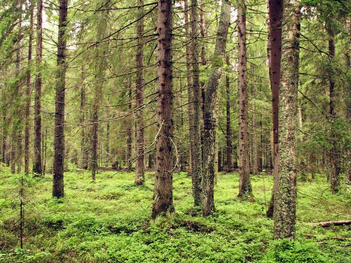 Жители карельской деревни Тунгуда призвали промышленников сохранить леса