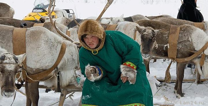 В Надыме готовятся к Дню оленевода