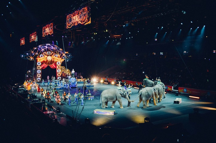 В Ижевске проверяют выступление цирковых животных со свастикой