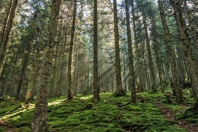 Селькупы возмутились вырубкой леса в Томской области