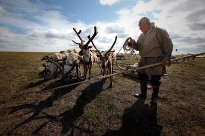 """Для сохранения традиционной кухни """"Оленеводы Мира"""" создадут Арктический кулинарный институт"""