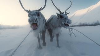 Международный кинофестиваль стран Арктики стартовал в Архангельске