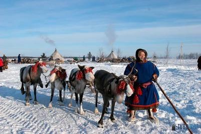 Санкт-петербургские ученые переселятся в чум к ямальским оленеводам