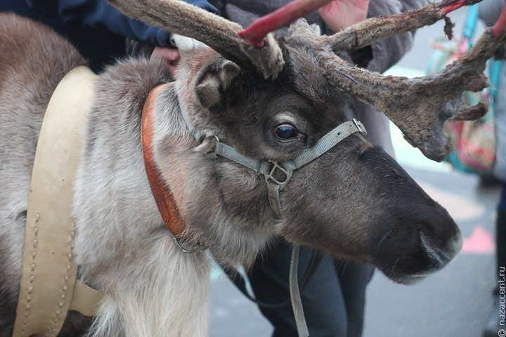 Обряд очищения проведут русский и эвенкийский Деды Морозы в Благовещенске