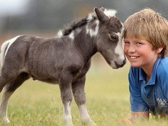 В Удмуртии назвали лучшее лошадиное имя