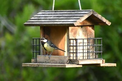 Казаки в Ессентуках подкармливают голодающих из-за самоизоляции горожан птиц в парке