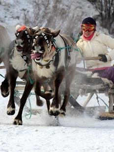 Праздник Севера и День оленевода пройдут в Ловозере