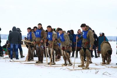 День оленевода начали праздновать на Ямале