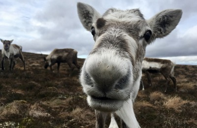 12 фактов об оленях