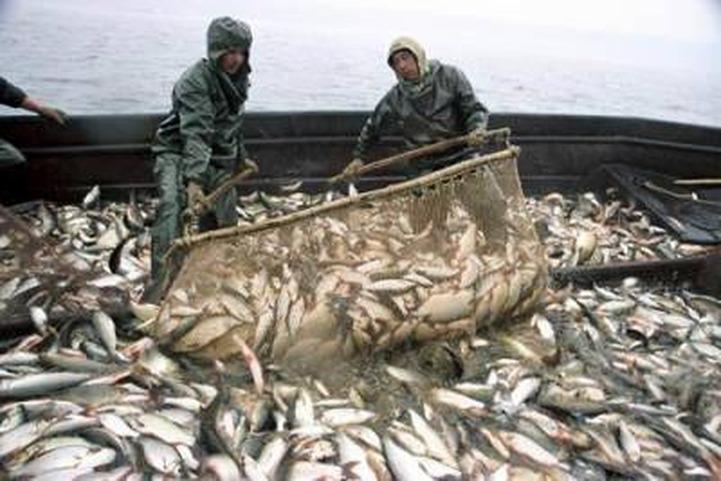 Депутат Госдумы предложил снять ограничения на вылов рыбы для аборигенов