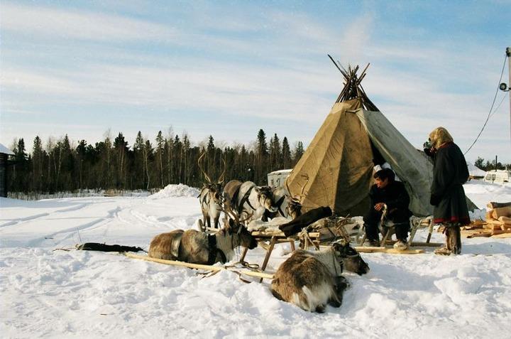 Коренные народы Севера хотят приравнять к фермерам