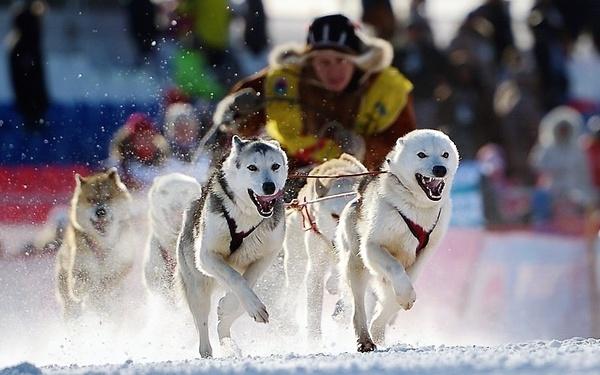 """Началась самая северная в России гонка на собачьих упряжках """"Надежда"""""""