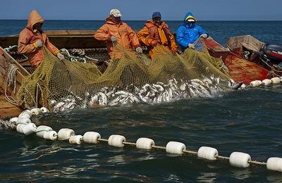 Бригадиру общины ительменов запретили ловить рыбу за браконьерство