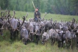 Якутские оленеводы пожаловались на несогласованные геологические работы