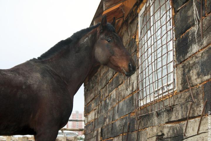 Два миллиона рублей составит призовой фонд на Дне коня в Татарстане