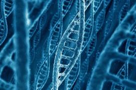 Ученые: Финны генетически близки коренным сибирским популяциям