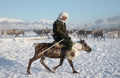 Камчатским оленеводам выплатили долг по зарплате в 16 млн рублей