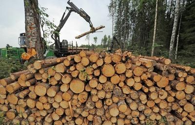 Земли орочей в Хабаровском крае изъяли для лесозаготовок