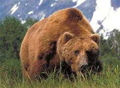 В Югре провели медвежьи игрища