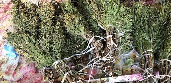 """""""Рвут и продают на рынках"""": алтайцы пожаловались на пренебрежение к священному растению"""