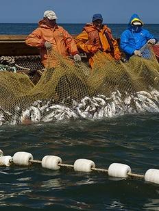 Коренным народам Камчатки отдали участки спортивного рыболовства