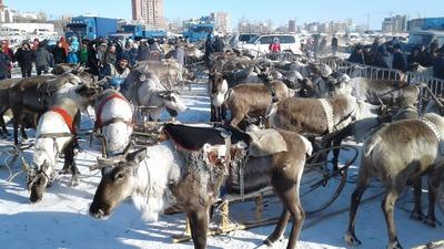 WorldSkills среди оленеводов и рыбаков проходит в Якутии