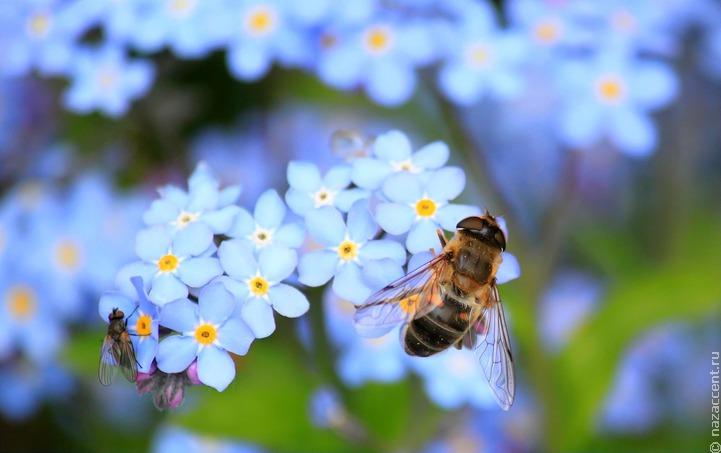 На юге Башкортостана массово гибнут пчелы
